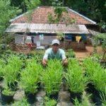 Pemanfaatan Tanah Pekarangan